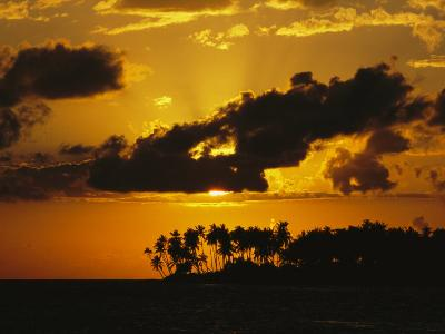 Silhouetted Palm Trees and Sun Behind Clouds at Twilight