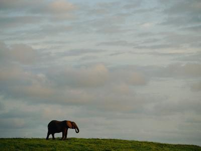 A Lone African Elephant (Loxodonta Africana) Shot against a Cloudy Sky