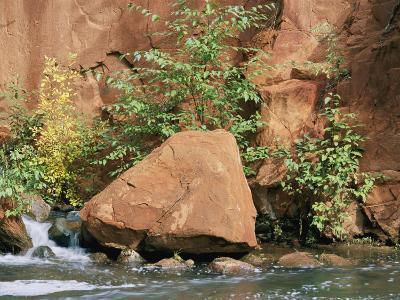 Red Rocks, Fall Colors and Creek, Oak Creek Canyon, Arizona