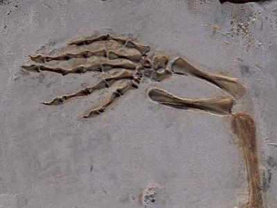 Fossil of Lizard-Like Creature, China