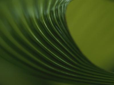 Close View of a Leaf Pattern, Costa Rica