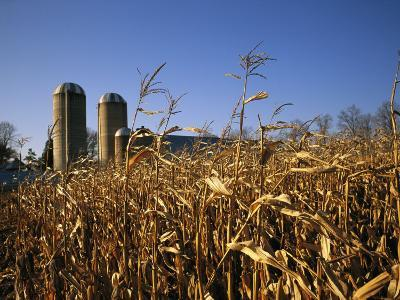 A View of Corn Fields with Silos in the Distance