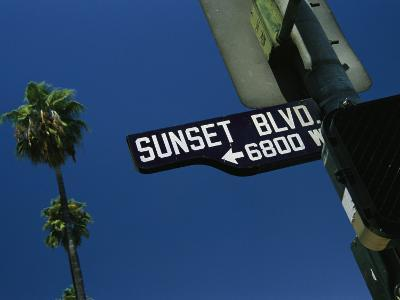 Looking up at Sunset Boulevard Sign with Palm Tree in Background