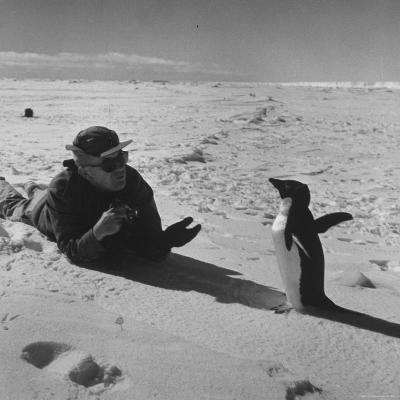 Ornithologist Photographing Native Penguin