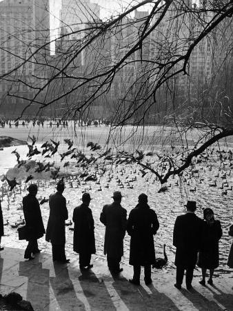 Feeding the Ducks and Swans in Central Park on a Sunday Afternoon