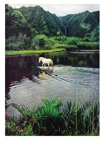 Horse Wading in Stream Amid Hills in Papera Region, South Seas