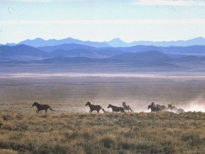 Band of Wild Horses Taking Flight Across Western Sage