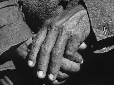 Hands of a Farmer Worn and Hardened