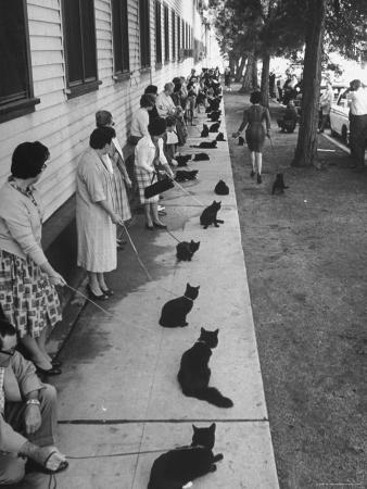 """Owners with Their Black Cats, Waiting in Line For Audition in Movie """"Tales of Terror"""""""