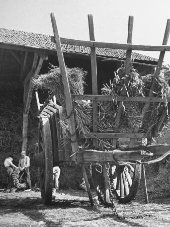 Men Constructing a Wheat Wreath Behind a Wheat Filled Wagon During the Harvest Season