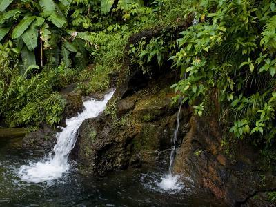 Two Small Waterfalls Flow into Fresh Water Pond in a Rain Forest