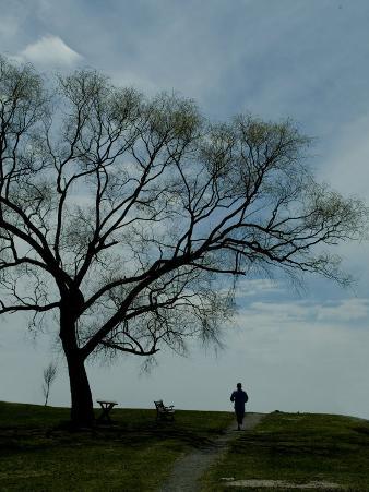 Jogger Runs Along a Path Past a Weeping Willow Tree