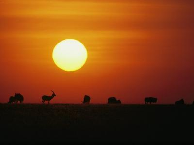 Silhouetted Wildebeest and Gazelle in Serengeti National Park