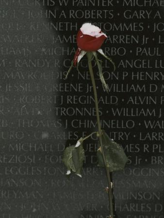 A Snow Dusted Rose Speaks of Lasting Love at a War Memorial