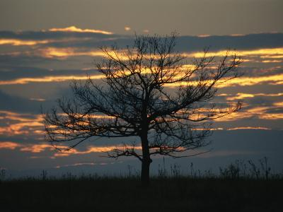 Sunset at Big Meadows with Bare Tree