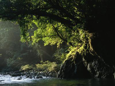 Lush Woodland Setting along a Stone-Filled Creek
