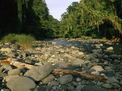 Stone-Filled Creek in a Woodland Setting