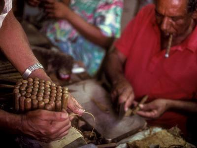 A Man Bundles up a Bunch of Finished Cigars in a Factory in Trinidad, Cuba, Trinidad, Cuba
