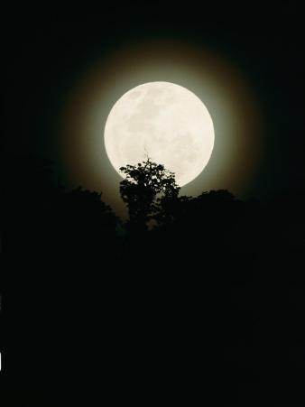 Moonrise in Parc Des Volcans