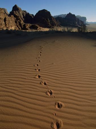 Animal Tracks Mark the Desert Land of Wadi Rum