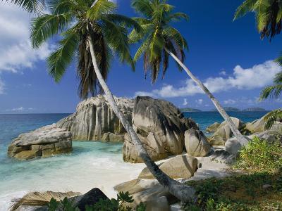 A Beach and Palm Trees on La Digue Island