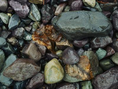 Rocks and Dead Leaves