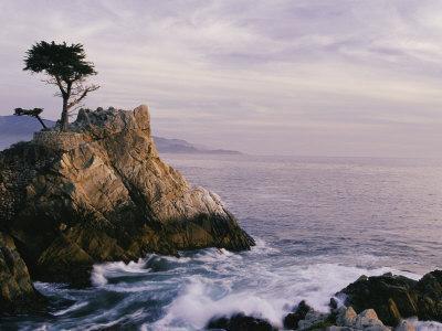 Lone Cypress Tree on a Rocky Point Near Pebble Beach
