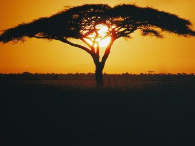 Sunset and Trees, Serengeti Plains, Tanzania