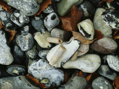 Stones and Shells at Beach, Close View, Jasmund National Park