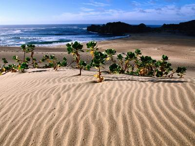 Dune Plants and Beach, Robberg Nature and Marine Reserve, Plettenberg Bay, South Africa