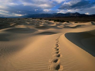 Footprints in Mesquite Sand Dunes, Death Valley National Park, USA