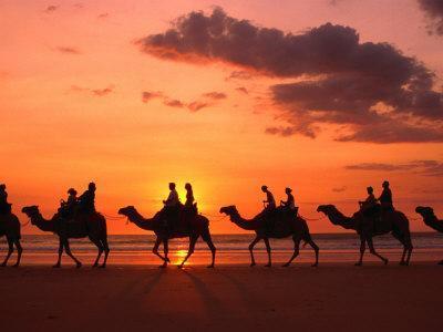 Camel Trek at Sunset along the Beach., Broome, Australia