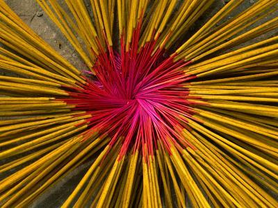 Incense Sticks Laid Out in Pattern to Dry, Mekong Delta, Vietnam