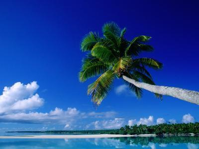 Palm Tree Over Aitutaki Beach and Lagoon, Aitutaki, Southern Group, Cook Islands