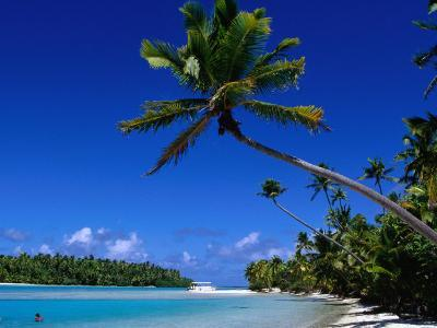 Palm Trees on Beach, Cook Islands