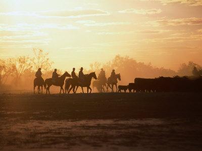 Silhouette of Stockman and Cattle,South Australia, Australia