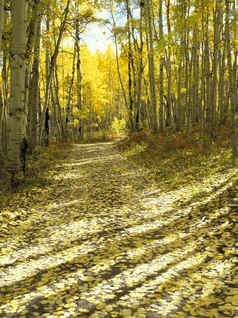 Aspen, Dirt Road, Kebler Pass, Colorado, USA