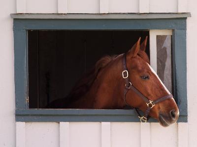 Thoroughbred Race Horse in Horse Barn, Kentucky Horse Park, Lexington, Kentucky, USA