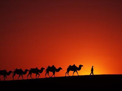 Camel Caravan at Sunrise, Silk Road, China