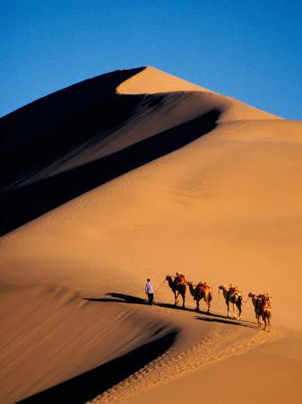 Camel Caravan at Sunset, Silk Road, China