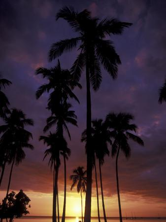 Palm Trees at Sunset, Puerto Rico