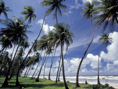 View of Manzanilla Bay, Port of Spain, Trinidad, Caribbean