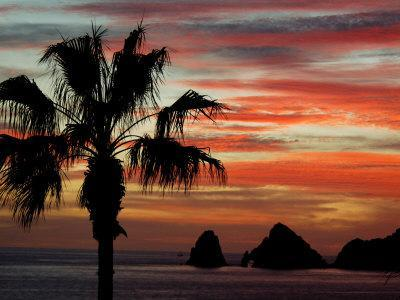 Sunset Palm with Rock Formation, Los Arcos in the Distance, Cabo San Lucas, Baja California, Mexico