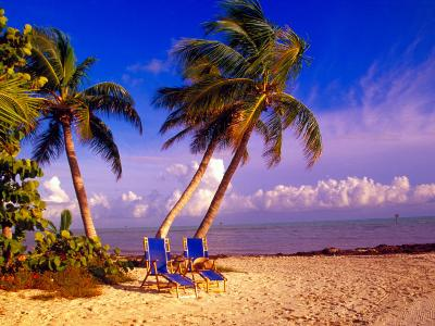 Palm Trees and Beach Chairs, Florida Keys, Florida, USA