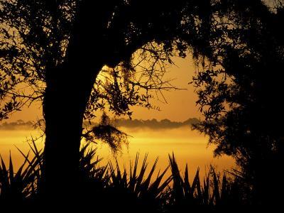 Palms and Oak Along Chimney Creek, Savannah, Georgia, USA