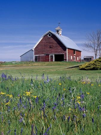 Old Red Barn with Spring Wildflowers, Grangeville, Idaho, USA