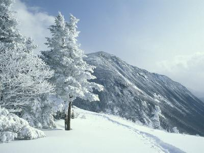 Snow Covered Trees and Snowshoe Tracks, White Mountain National Forest, New Hampshire, USA