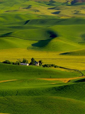 Rolling Green Hills of Spring Crops, Palouse, Washington, USA