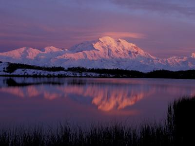 Mt. McKinley Reflected in Pond, Denali National Park, Alaska, USA