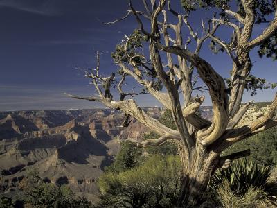 Grand Canyon from South Rim, Grand Canyon National Park, Arizona, USA